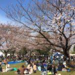 三ツ和公園お花見日和!(20170402)